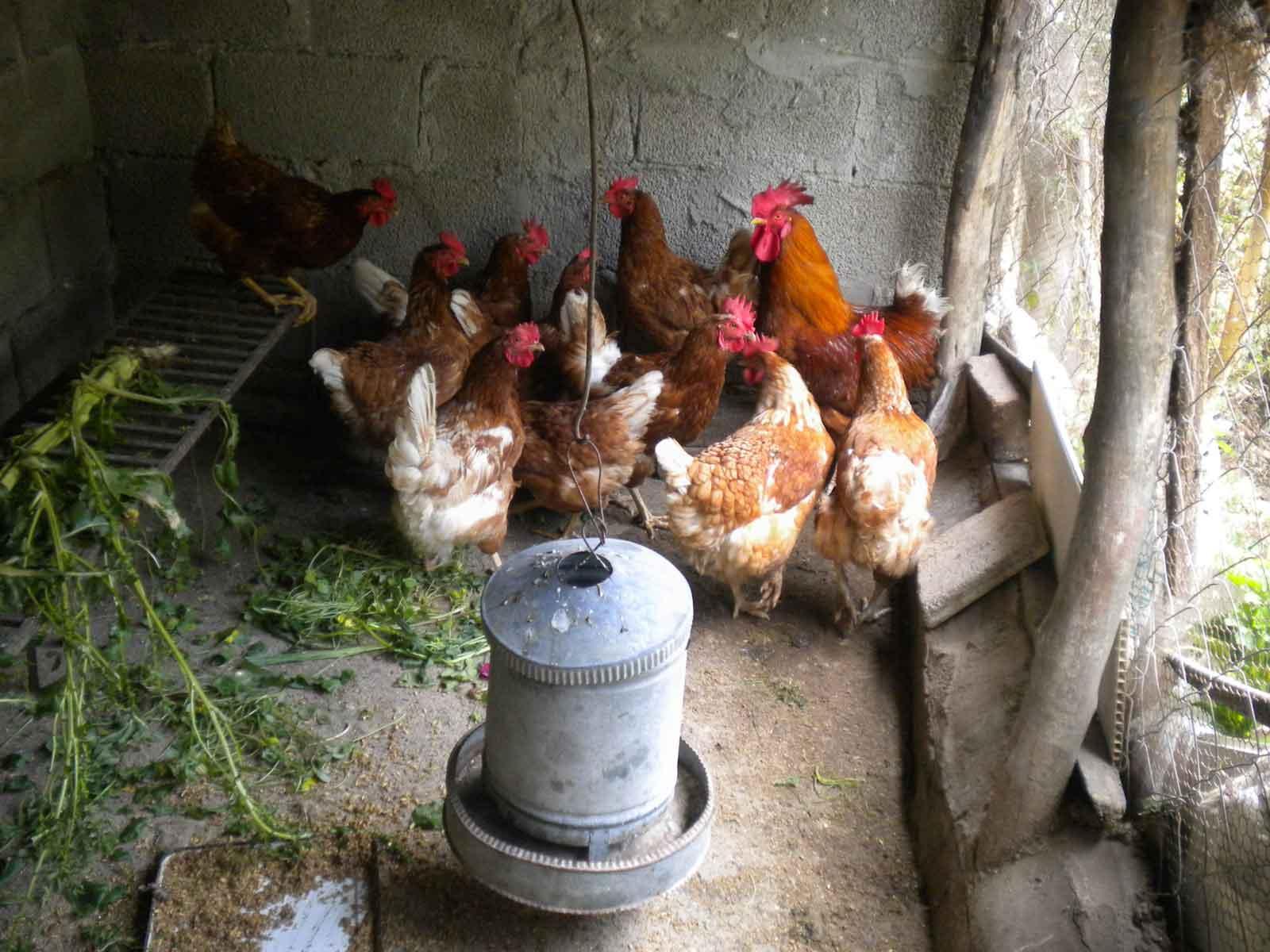 Animal-Farming10