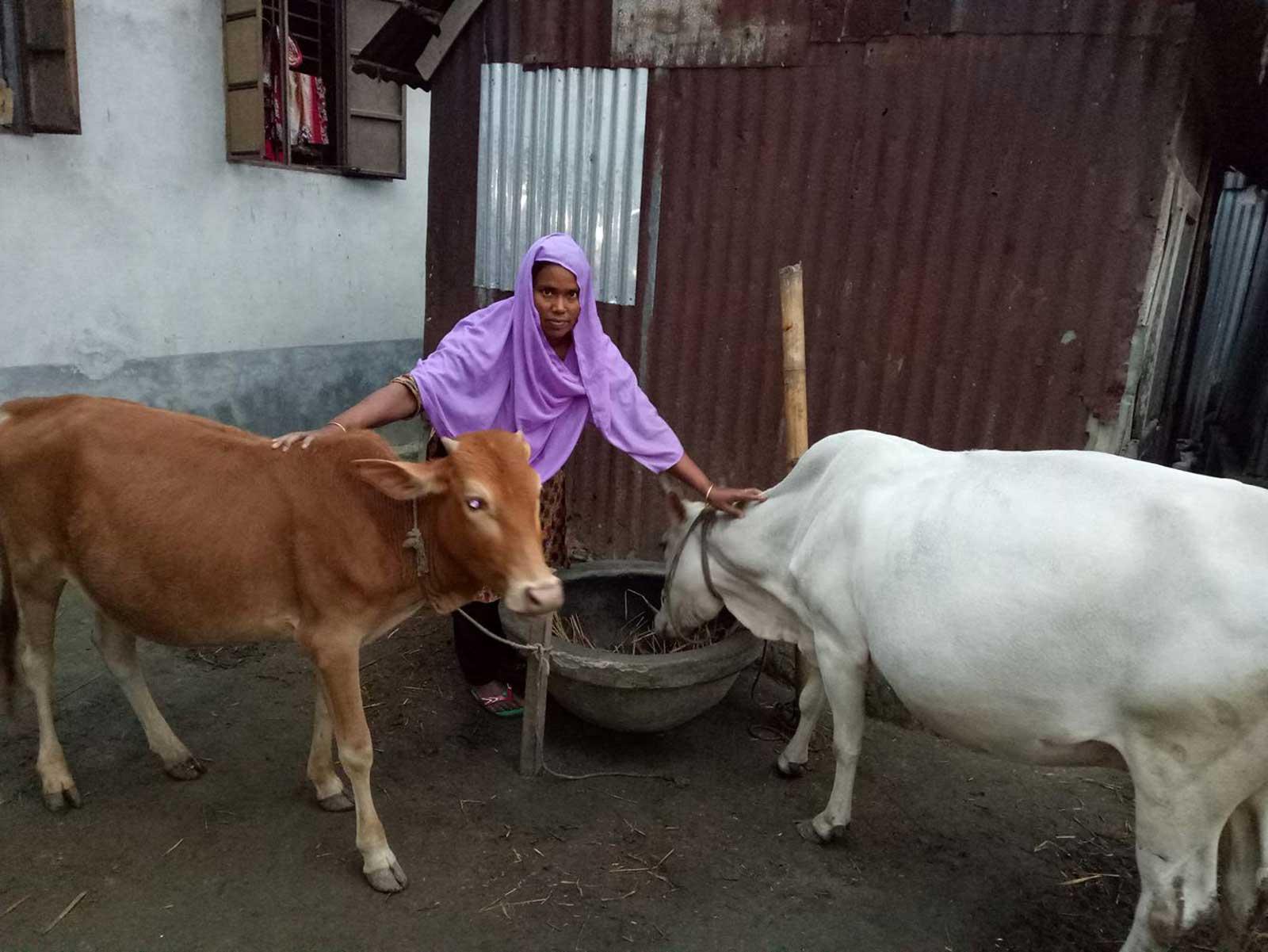 Animal-Farming4