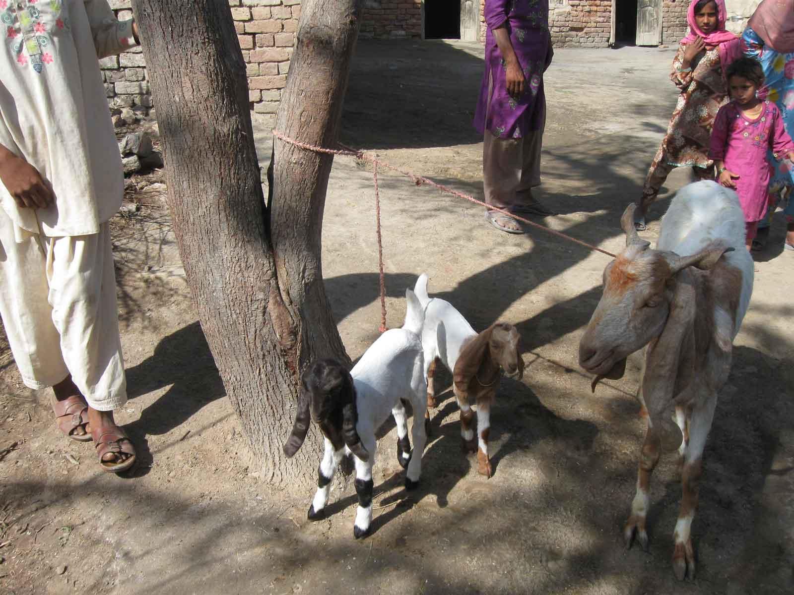 Animal-Farming6