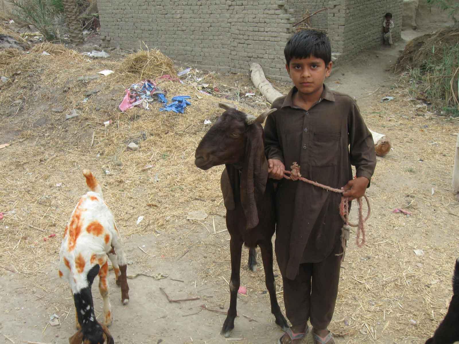 Animal-Farming7